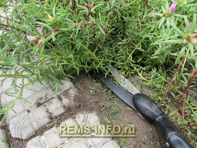 Садовая дорожка своими руками из самодельной плитки фото